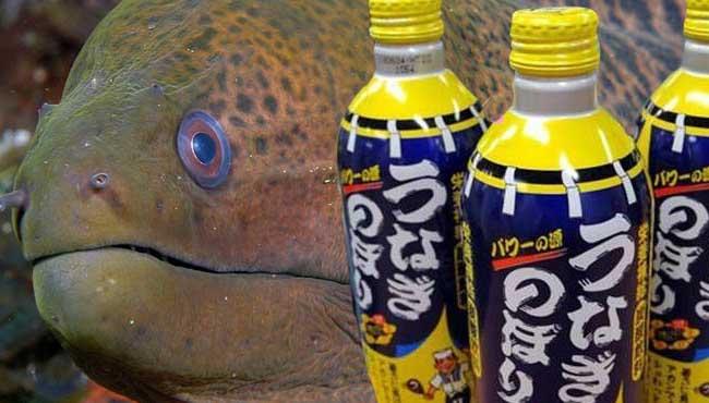 Eel Soda - The Foyager